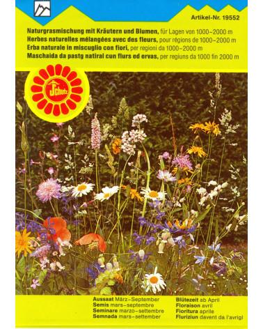 Naturgrasmischung mit Kräutern und Blumen