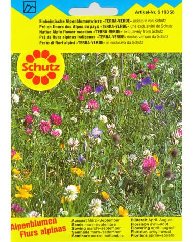 Alpenblumenwiese, einheimische