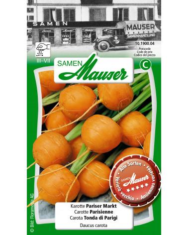 Karotte Pariser Markt