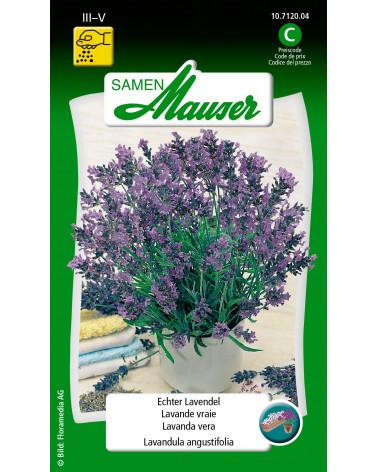 Lavendel, echter