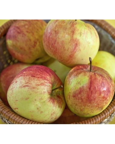 James Grieve, Apfel