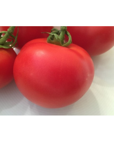Tomate Country Taste