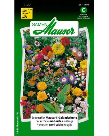 Halbhohe Sommerblumen