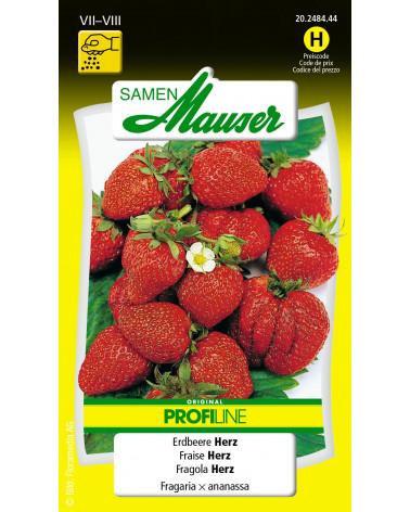 Herz-Erdbeere