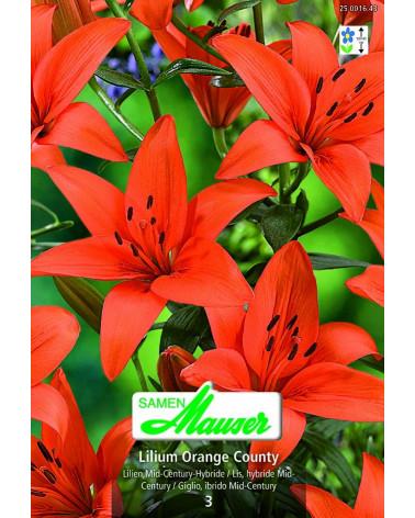 Lilie Orange county