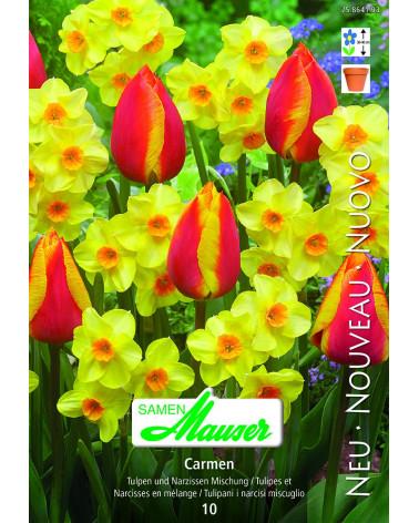 Carmen - Mischung Tulpen und Narzissen