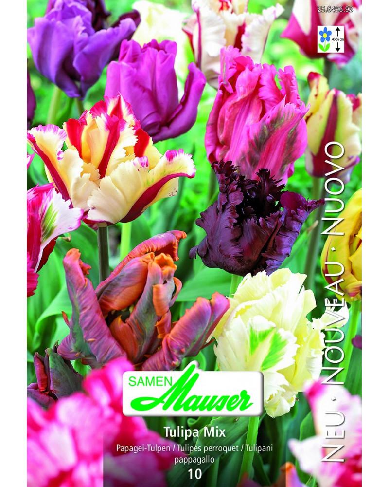 Papagei-Tulpen, Mischung