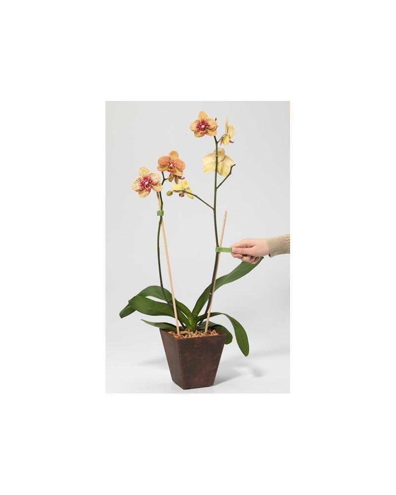 Pflanzenbinder mit Klettverschluss