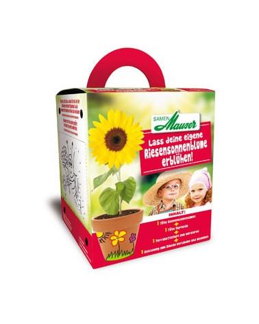 Kinderbox Sonnenblume