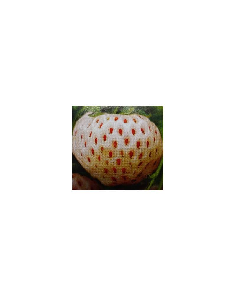 Erdbeere Weisse Ananas