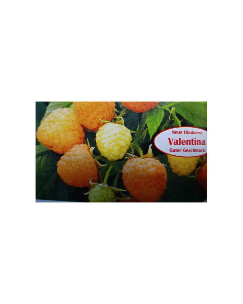 Himbeere Valentina