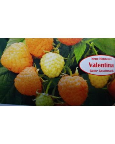 Himbeere 'Valentina'