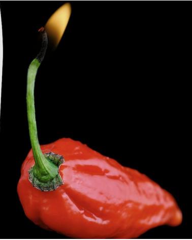 Peperonchini 'Bhut Julokia Red'
