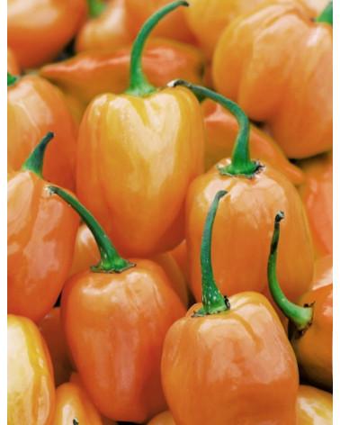 Peperonchini Habanero