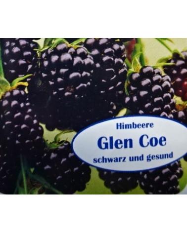 Schwarze Himbeere 'Glen Coe'