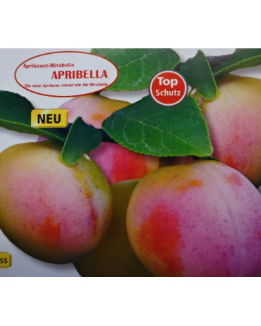 Aprikosenmirabelle Apribella