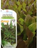Poschiavo-Salat, Jungpflanze