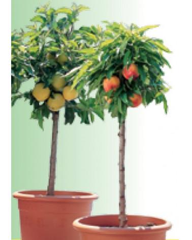 Mini-Apfel