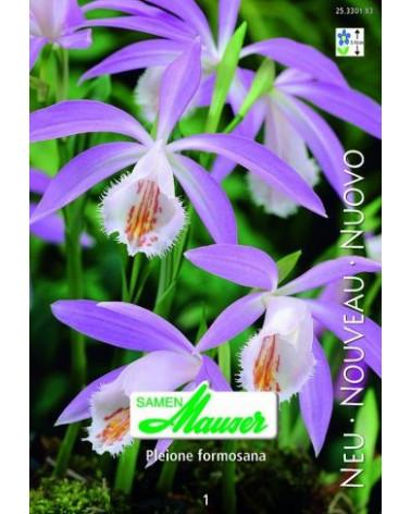 Tibet-Orchidee