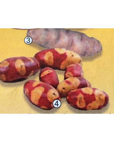 Marzipankartoffel Mayan Twilight 700g