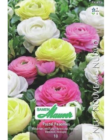 Ranunculus Pastel Paeonies