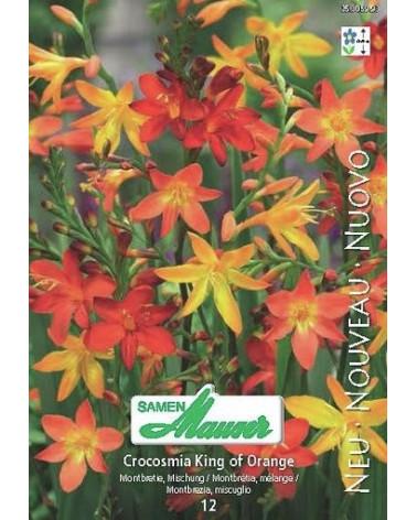 Crocosmia-Hybriden Montbretie King of Orange