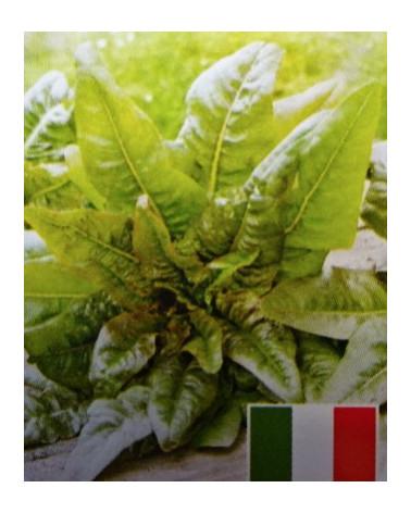 Salat Venezianer
