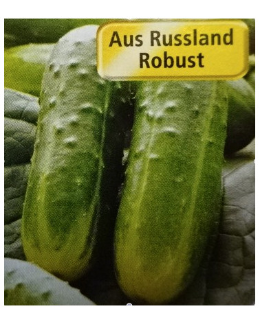 Russische Gurke