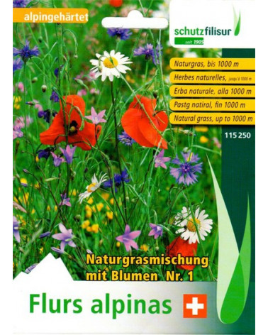 Samen heimische Wiesenblumen