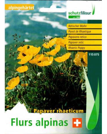 Rätischer Mohn Papaver rhaeticum