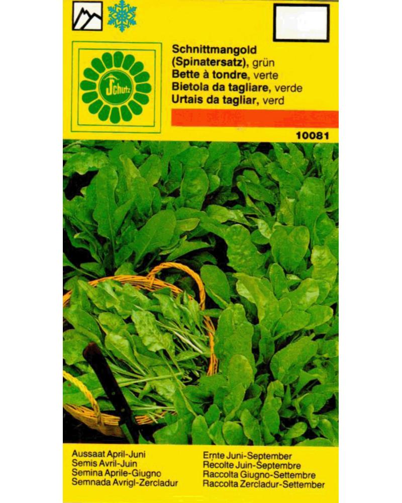 Grüner Schnittmangold Samen