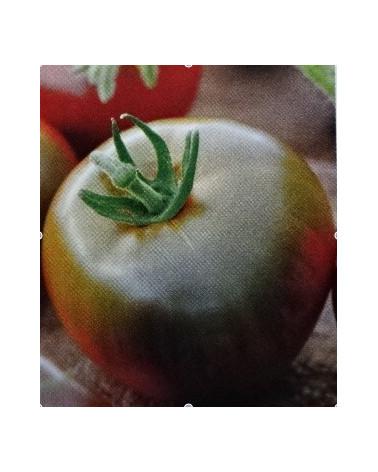 Tomate Schwarze Krim