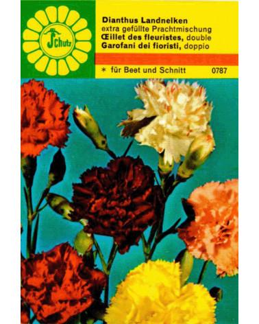 Landnelke, Dianthus caryophyllus Samen