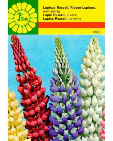 Lupinen-Riesen, Lupinus-Hybriden Samen