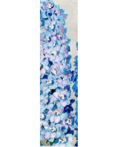Delphinium Pacific-Hybriden Summer Skies, Rittersporn