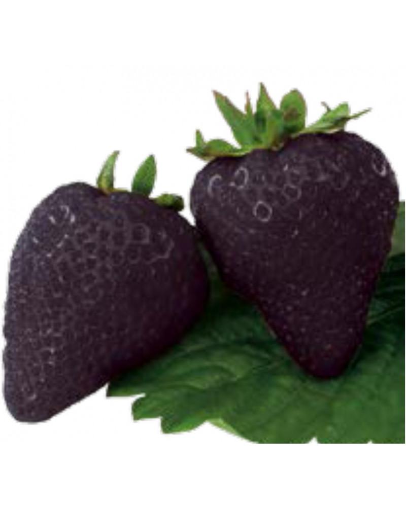 Erdbeere Schwarze Ananas