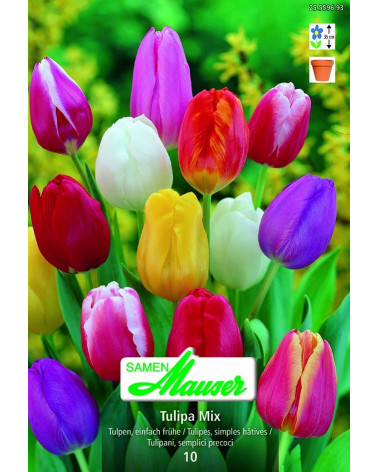 Mischung einfache, frühe Tulpen