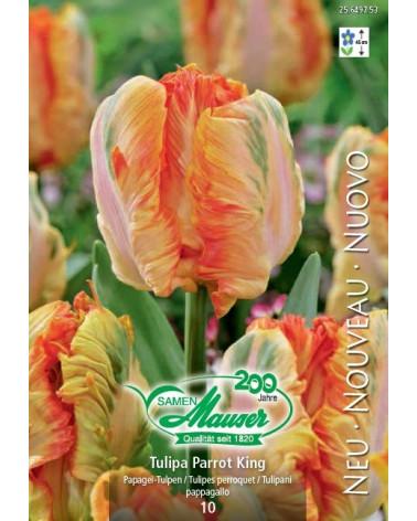 Tulpe Parrot King