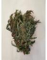 Reisig, Juniperus, Wachholder 700g