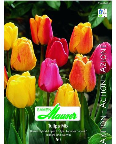 Mischung Darwin-Hybrid-Tulpen