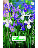 Delft Blue (Iris)