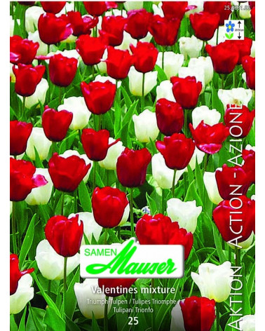 Valentines (Tulpenmischung)
