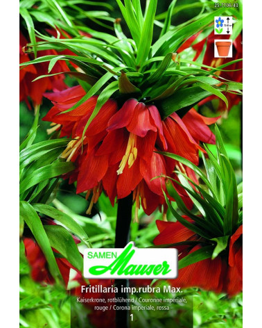 Fritillaria - Kaiserkrone, orange
