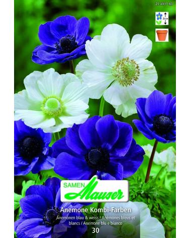 Anemonen-Mischung  blue & white