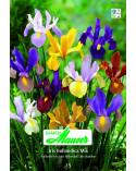 Iris Beauty Mischung