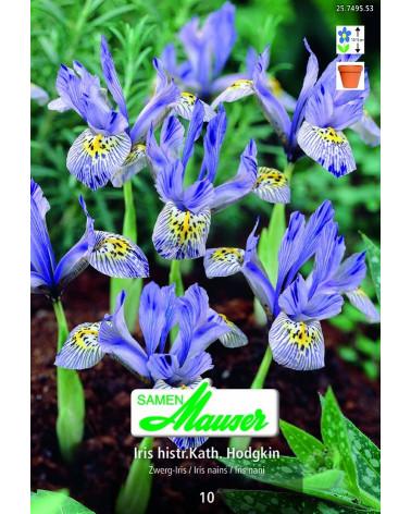 Orchideen-Iris