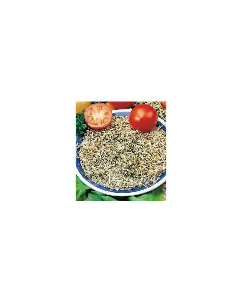 Bio-Keimlinge Alfalfa (Luzerne)