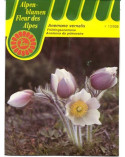 Frühlings-Anemone