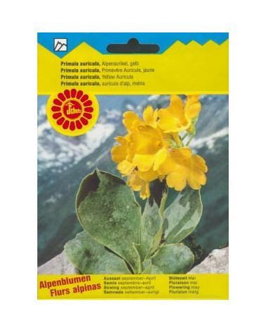 Alpenaurikel, gelb