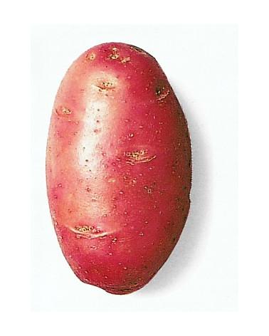 Kartoffel Desiree